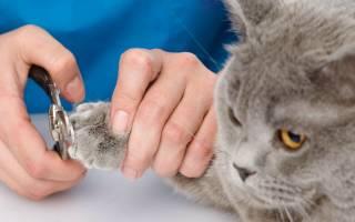 Как правильно подстричь когти коту