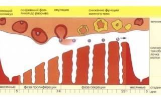 Причины появления коричневых выделений во время овуляции