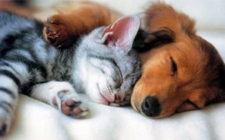 Как вылечить лямблиоз у кошек и собак?
