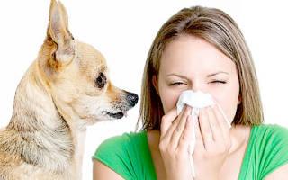 Аллергия на животных — как проявляется аллергия на кошек, собак, птиц