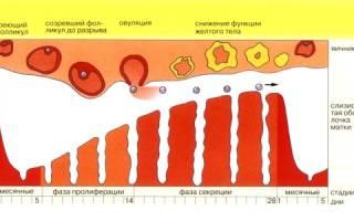 Что такое месячные и что значит их цикл?
