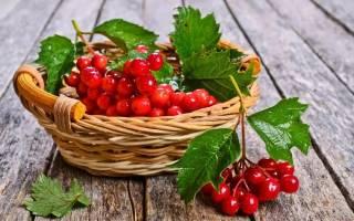 Калина красная: полезные свойства, противопоказания, особенности применения