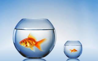 Какие паразиты обитают в аквариуме?