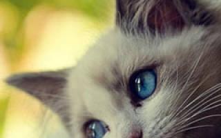Существует ли надежное, стопроцентное средство от аллергии на кошек?