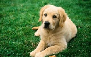 Как вывести глистов у собак самостоятельно?
