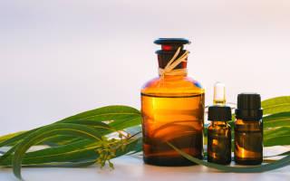 Полезные свойства эвкалипта для здоровья