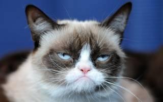 Умерла самая известная кошка – звезда мемов