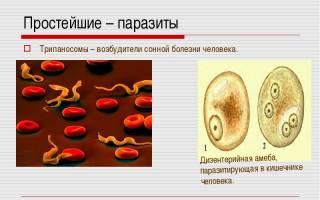 Какие простейшие паразиты есть у человека?