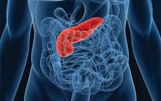 Что такое паренхима поджелудочной железы?