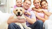 Можно ли заразиться глистами от собаки?
