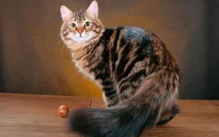 Как избавиться от аллергии на эпителий кошки?