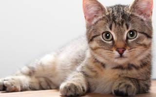 Вся правда об противогельминтных препаратах для кошек