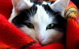 Экзема у собак и кошек: причины, проявления, лечение