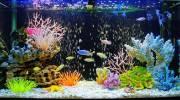 Каких аквариумных рыбок выбрать новичку