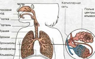 Симптомы и лечение хронического трахеита
