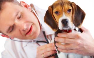 Как выявить токсоплазмоз у собаки