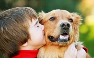 Симптомы и лечение лямблиоза у собак