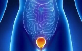 Где находится и как работает в здоровом состоянии мочевой пузырь?