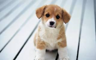 Как выбрать подходящую кличку для собаки?
