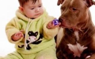 Аллергия у детей на кошек, других животных, как обезопасить ребёнка
