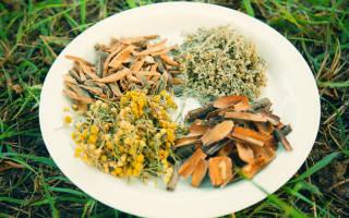 Разновидности лекарственных растений для лечения гельминтоза