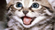 Аллергия на кошек: лекарство и как бороться с аллергией на домашних животных