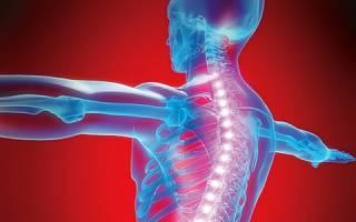 Анатомия, строение и функции позвоночного столба у человека