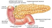 Какие биоактивные вещества вырабатывает поджелудочная железа?
