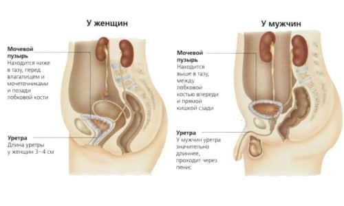 Мужчины страдают от цистита в 5 раз реже, но симптоматика проявляется сильнее