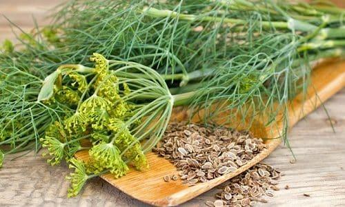 В домашнем лечении цистита хорошо себя зарекомендовали семена укропа