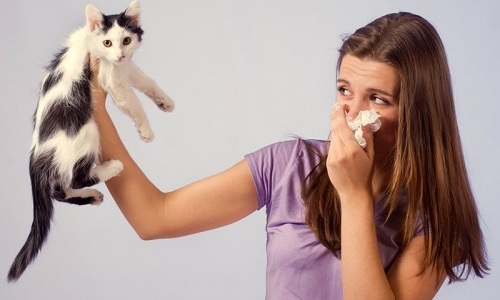 Бывалые кошатники знают, что не просто избавиться от запаха кошачьей мочи