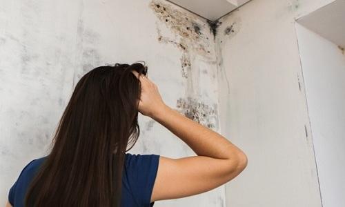 Плесень на стене в квартире накапливается во влажных и плохо вентилируемых помещениях