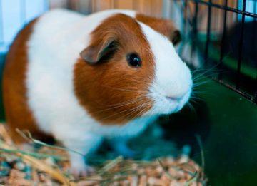 9 домашних животных, не требующих тщательного ухода