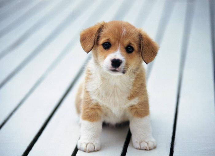 Как выбрать подходящую кличку для собаки