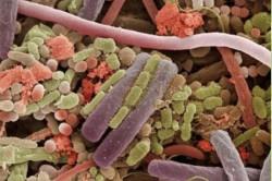 Нарушение качественного состава бактерий кишечника после антибиотиков