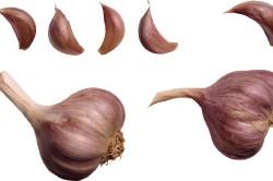 Польза чеснока при лечении сухого ринита