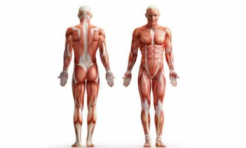 Важны 3 вида упражнений, которые укрепляют мышцы тазового дна, укрепляющие низ живота (поперечные брюшные и косые мышцы)