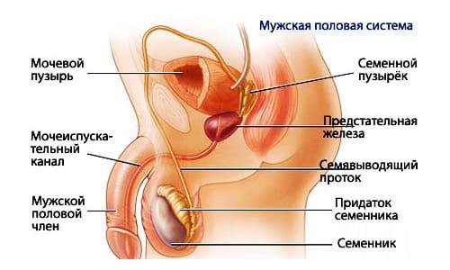 Почемумагнитно-резонансная томография, ане УЗИ? фото