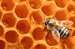 Пчелиный воск для изготовления обезболивающих свечей