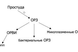Схема развития простудных заболеваний