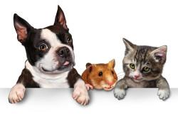 Животные - причина аллергии
