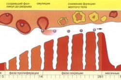 Менструальный цикл и его физиология