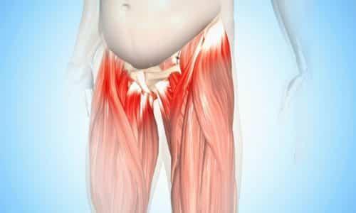Лобково-копчиковая мышца является одной из мышц тазового дна