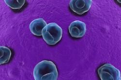 Хламидии - причина хламидиоза
