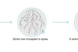 Процесс инфицирования менингита