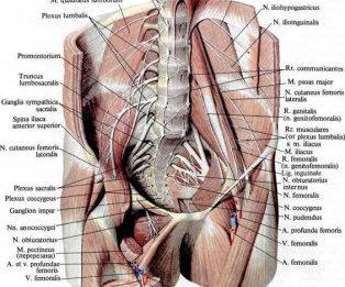 Функции мышц пояснично-крестцового отдела