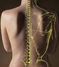 Симптомы и причины, связанные с патологией опорно-двигательного аппарата