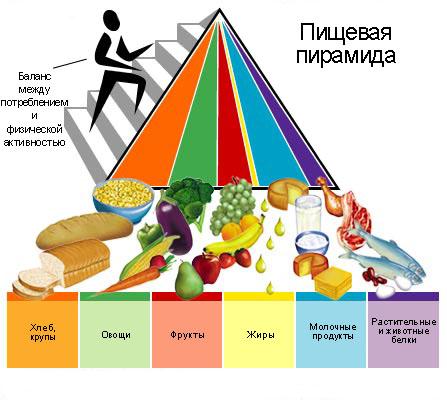 Пирамида пищевая!