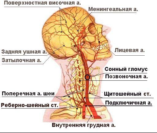позвоночная артерия, проходящая в шейном отделе позвоночника