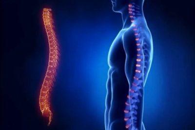 Упражнения для укрепления мышц грудного отдела позвоночника
